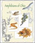 Amphibians-Cover.jpg