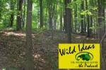 wildildeaslogowithforest-268x178.jpg
